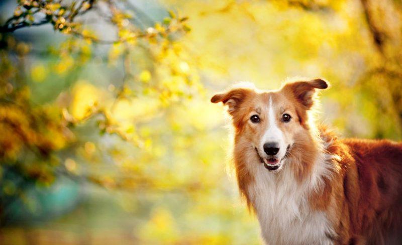 Great dog photo poses