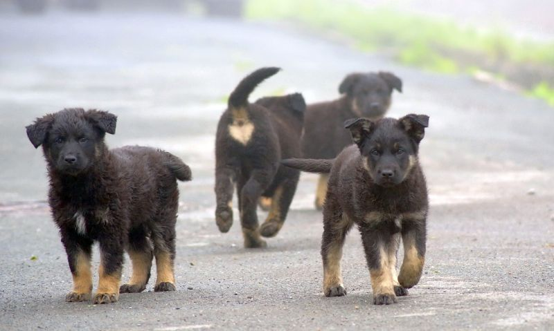 stray puppies in street