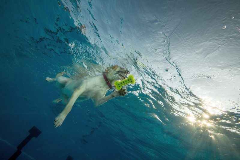 dog photos in water