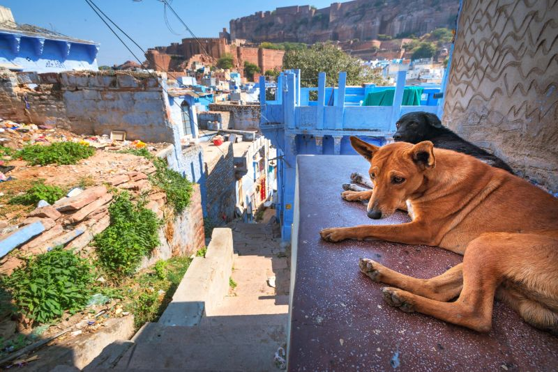 dog ownership in India