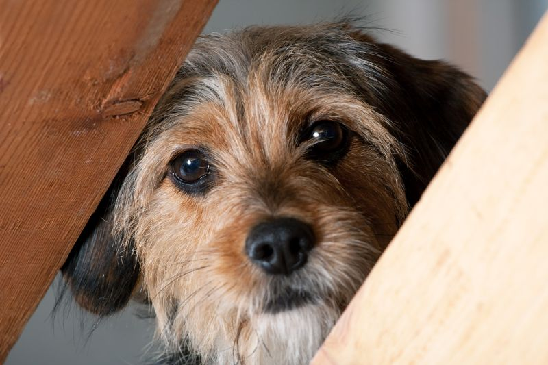 Alternative anxiety strategies for dogs