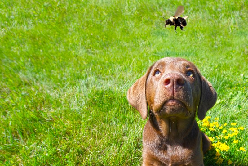bad experiences can cause fear in dogs
