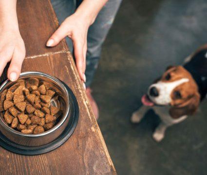 good organic dog food