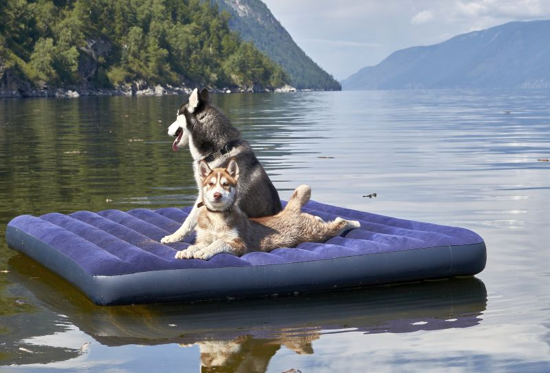 dogs love floating on water