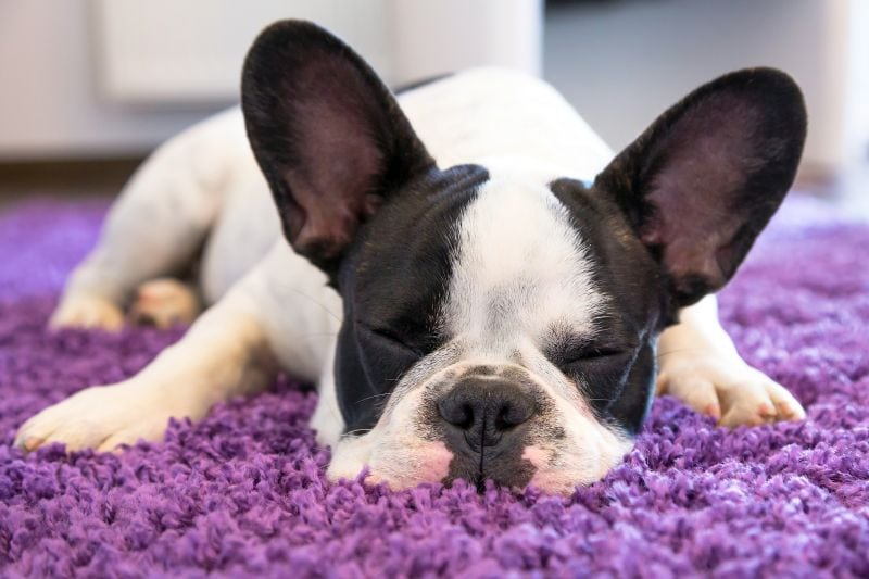carpet cleaners that are safe for dogs