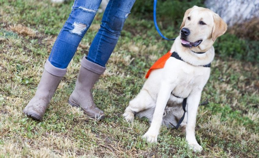 what is a conservation detection dog