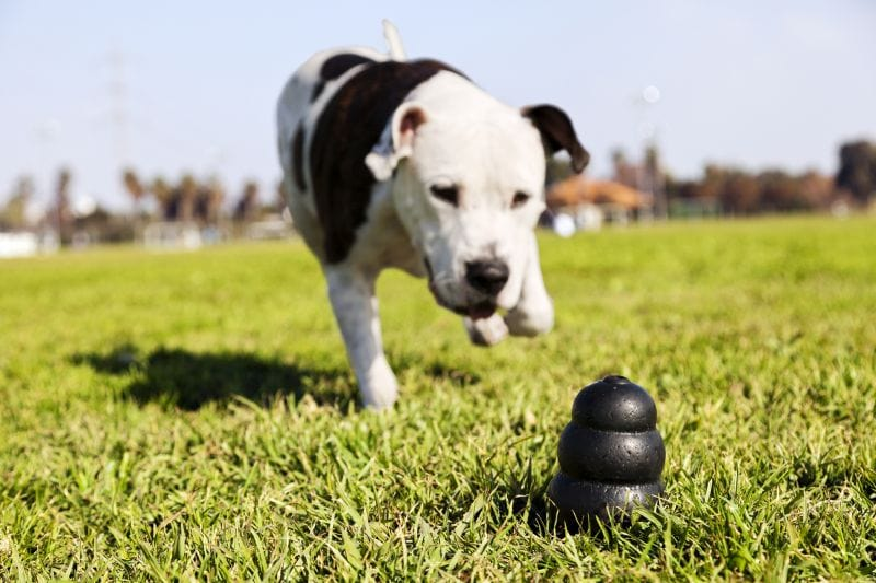 Toys can help with canine anxiety