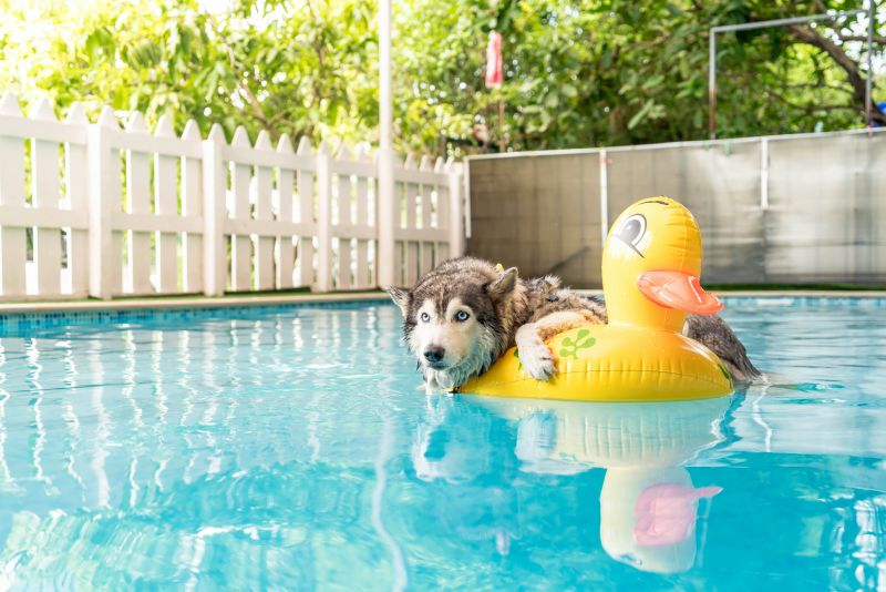floats designed for dogs are best