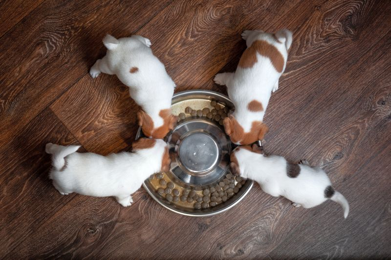 Picking a small breed puppy food