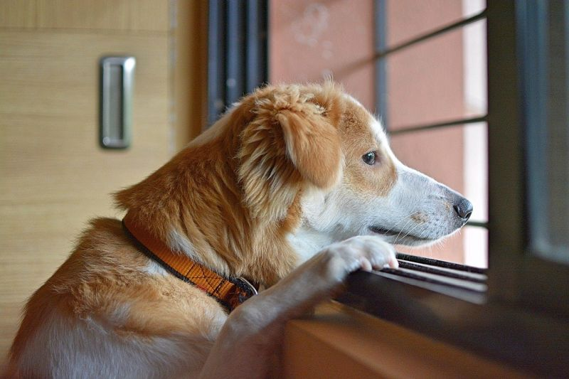 signs your dog is afraid of going outside