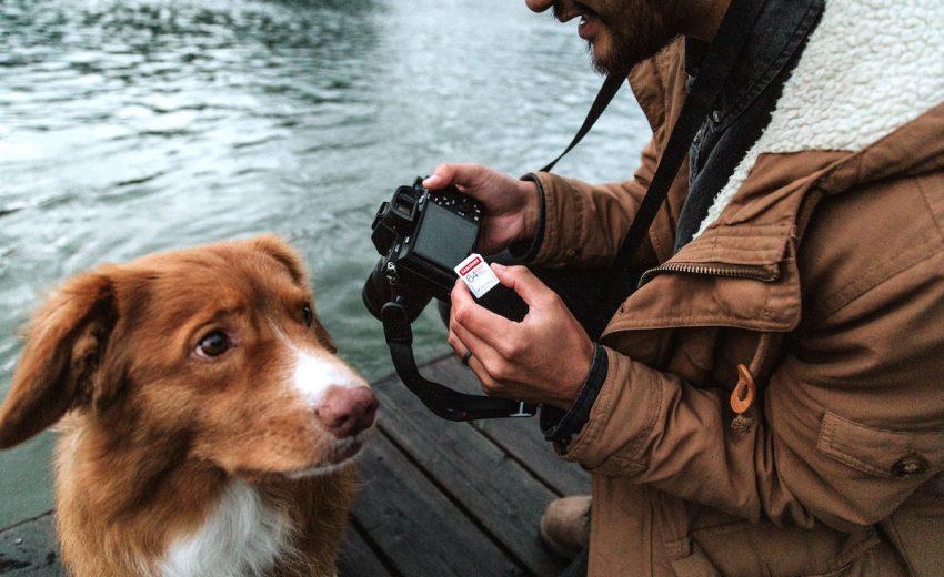 dog-photo-poses
