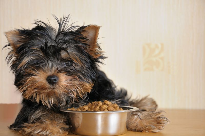 picking a dog food for puppies