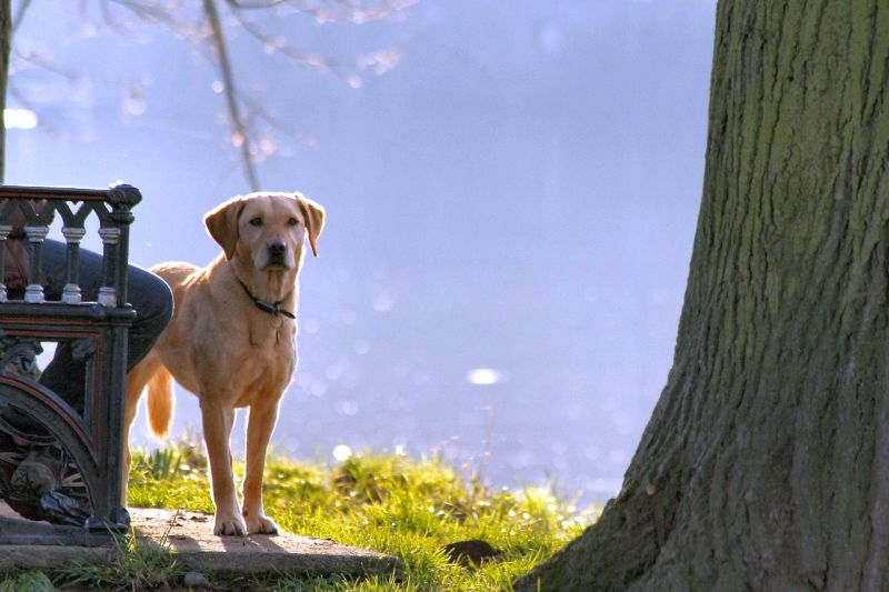 help increase your dog's confidence
