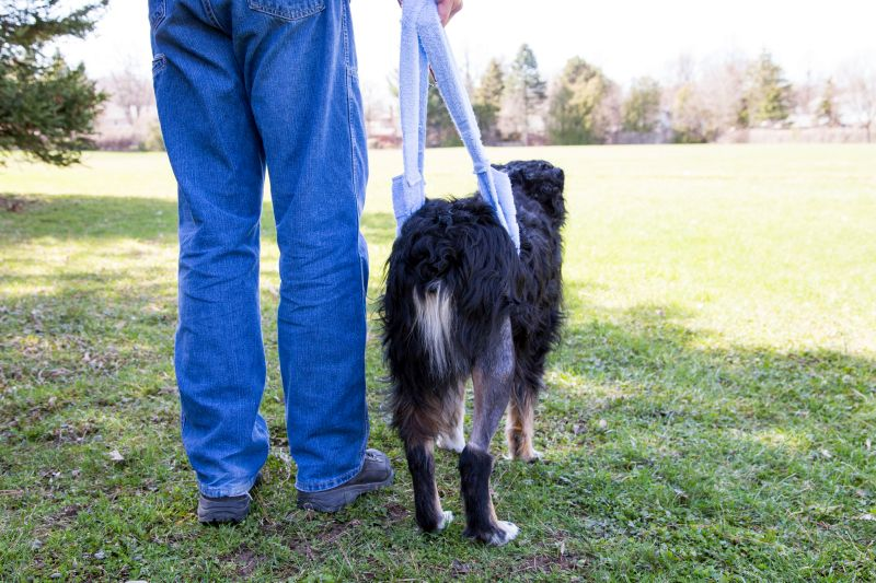 Injuries can trigger fear in dogs