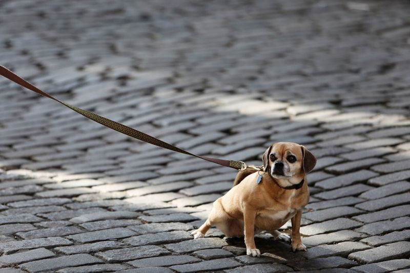 leash unfamiliarity can cause fear