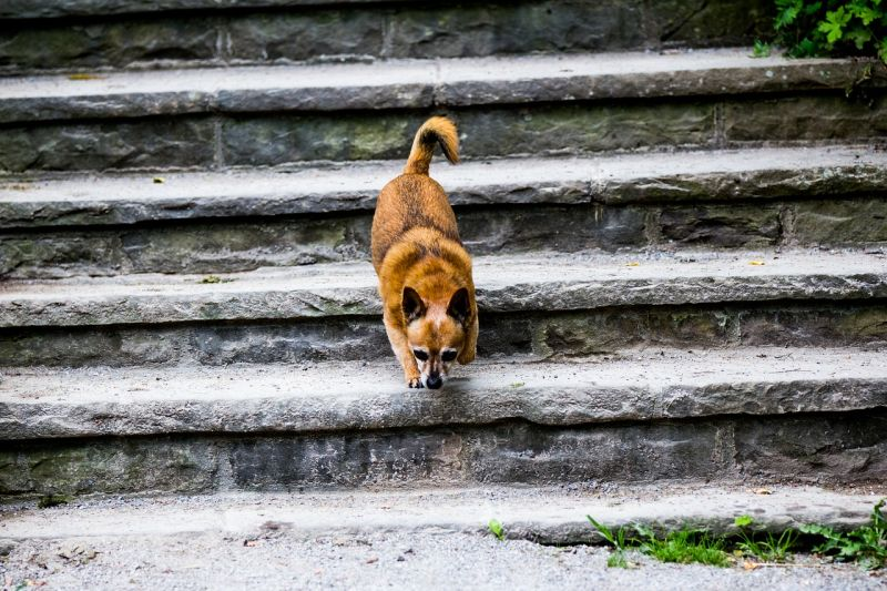 stairs frighten some dogs