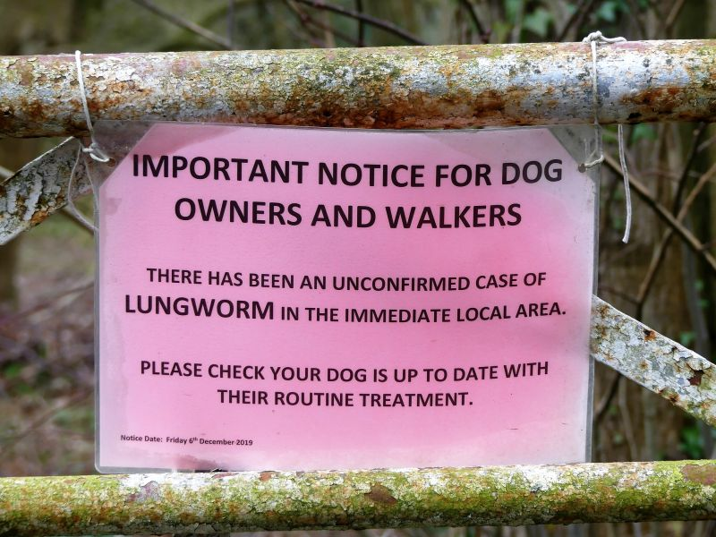 lungworms in dogs