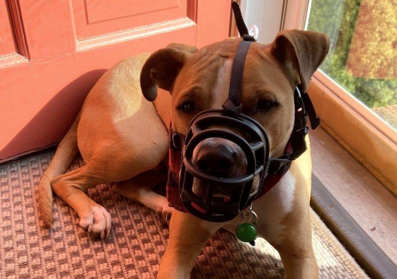 muzzle on dog