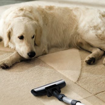pet-safe carpet cleaners smell good