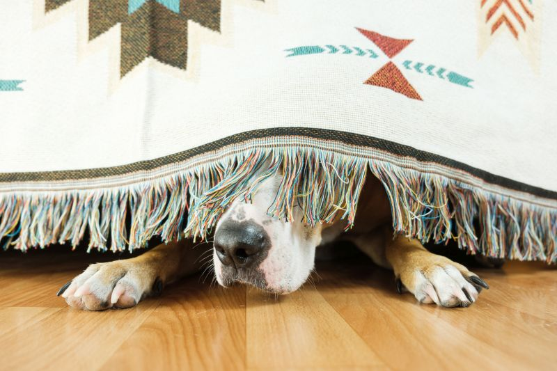 dogs can feel anxiety