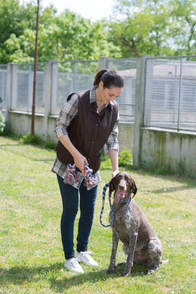 how to train dogs for detection work