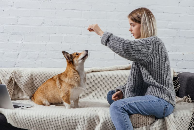how to teach dog to leave it