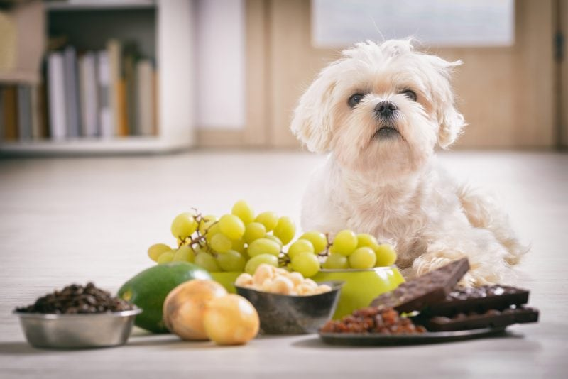 reasons to make dog vomit