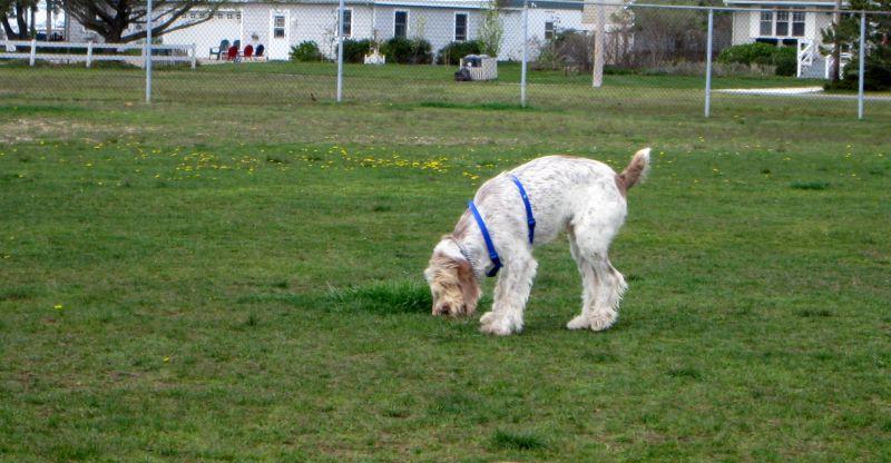 Barnegat Dog Park NJ