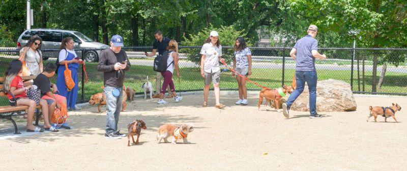 Bronx dog park