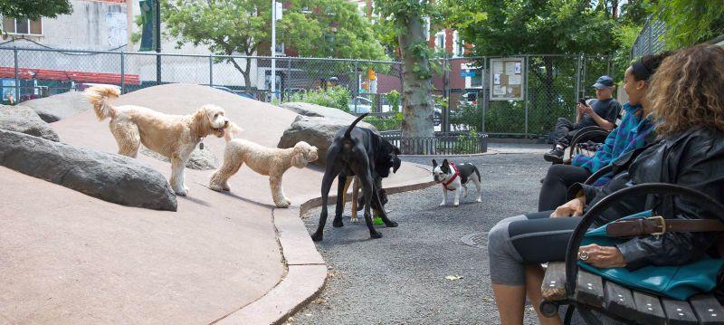 Chelsea Waterside Dog Park