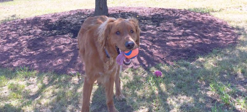 Edison-Metuchen Community Dog Park NJ