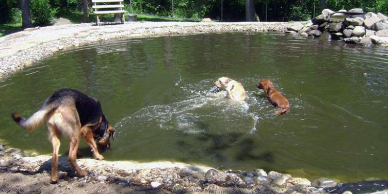 Rocky Top Dog Park NJ