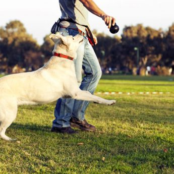 Ways to enrich your dog