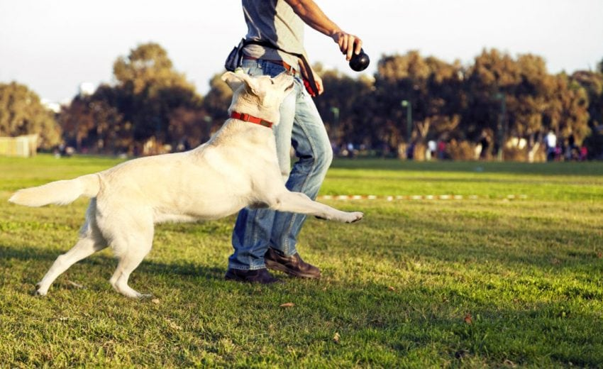 Ways to enrich your dog's life