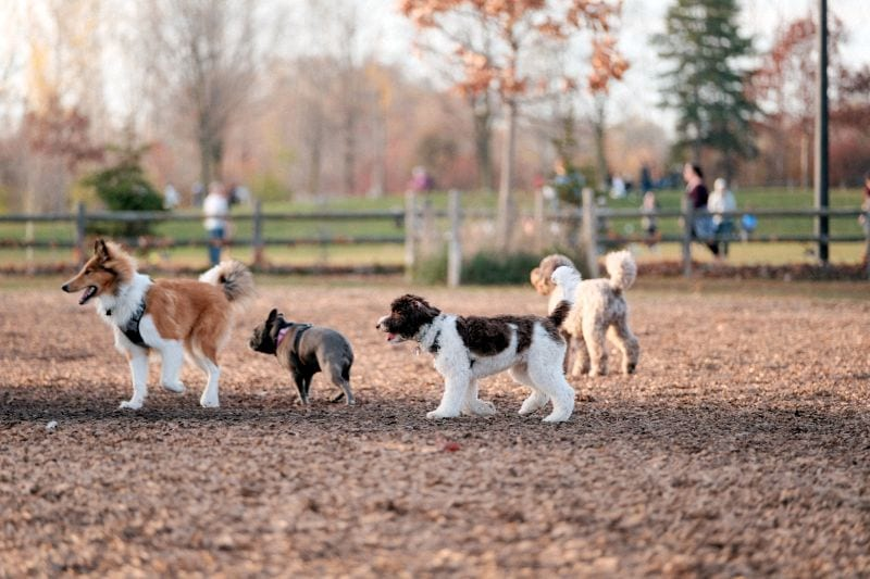 how to pick a good dog park
