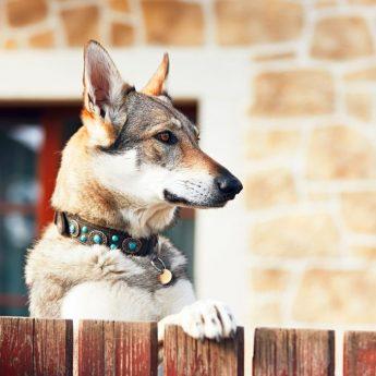 Super comfy dog collar