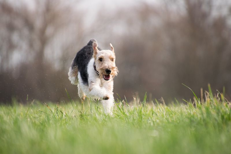 cures for canine constipation