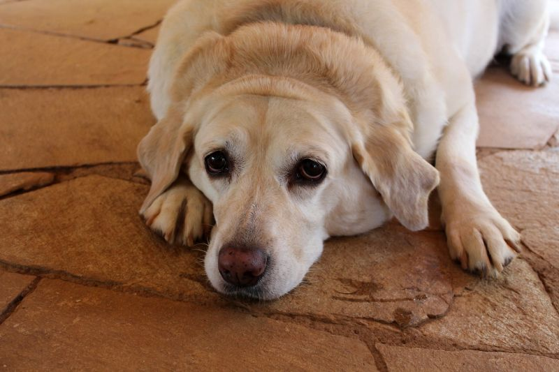 preventing canine cataracts