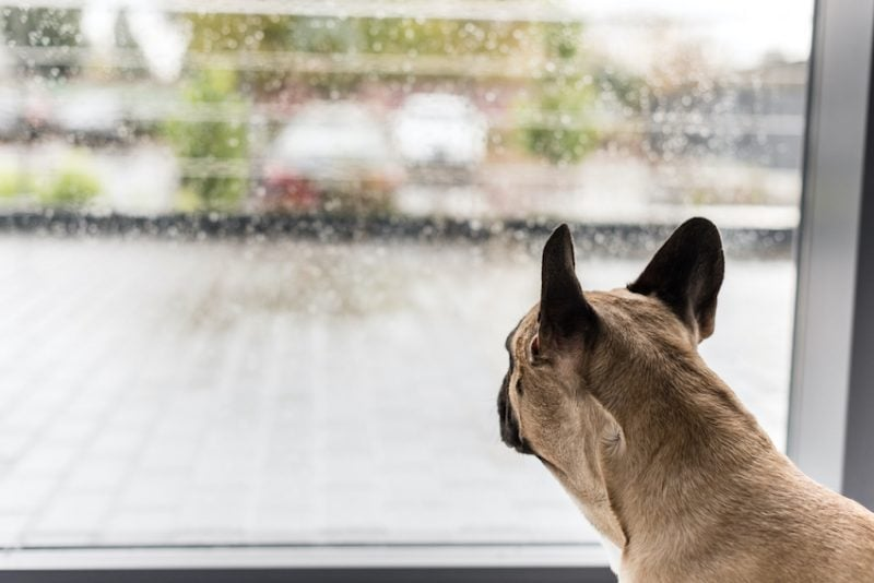 dog barks out window