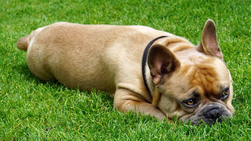 what causes dog constipation