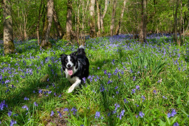 Let your dog explore unfamiliar places