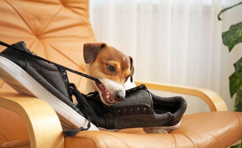 dog management hacks
