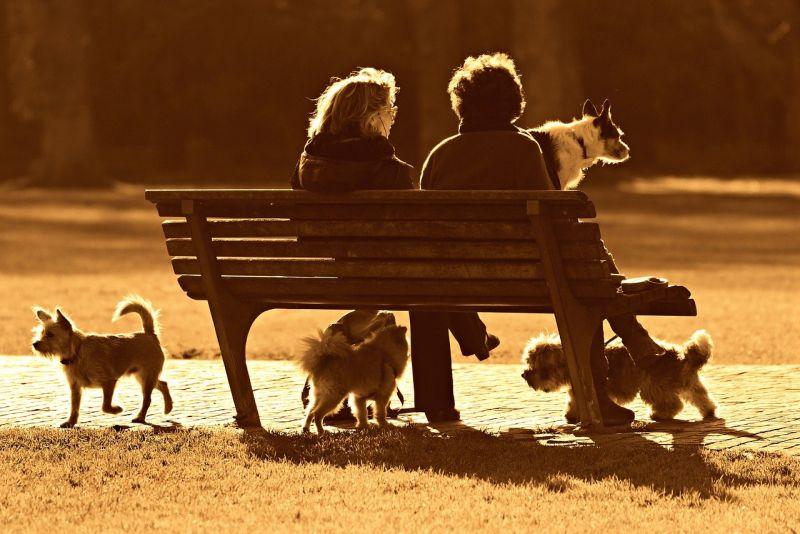 Why visit a dog park