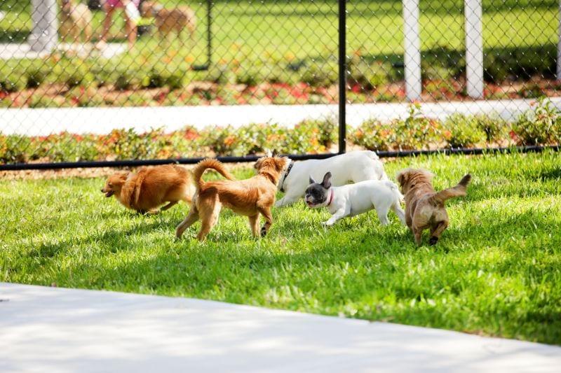 New Jersey Dog Parks