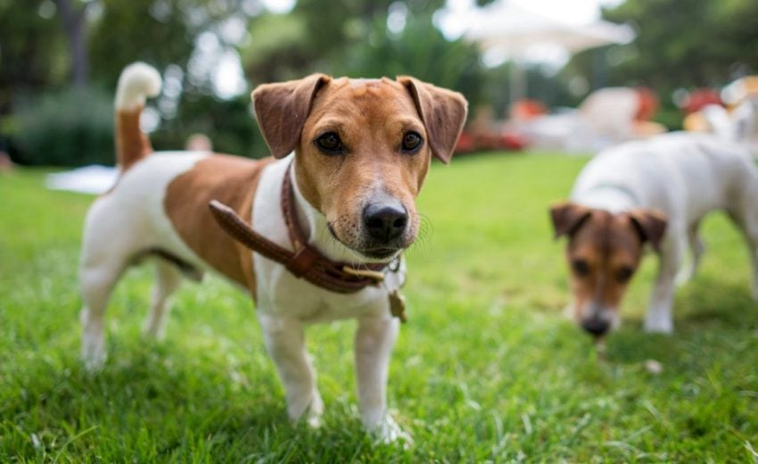 Best Dog Parks in NYC