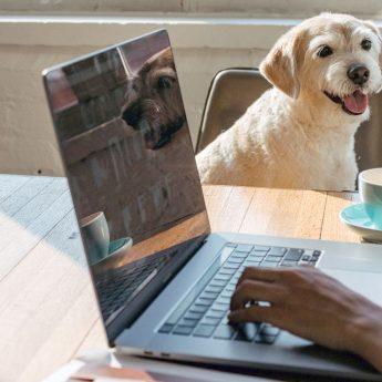 helpful dog training software