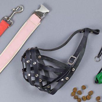 Essential Dog Training Gear