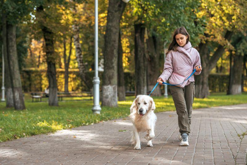 basic dog care skills