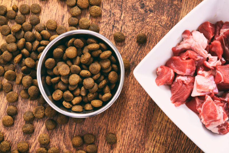 sustainable dog food brands