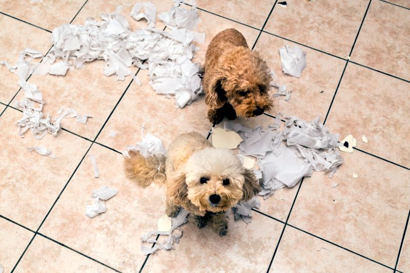 Enrichment is great for treating destructive dog behaviors